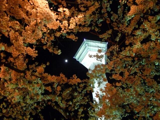 函館五稜郭の写真