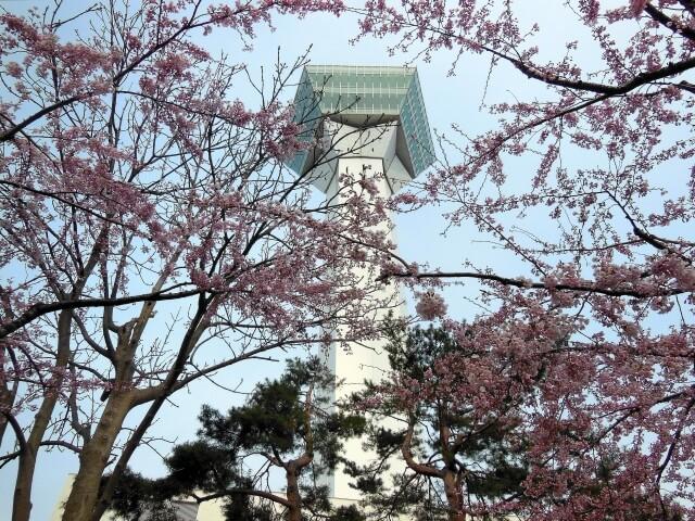 函館・五稜郭タワーの写真