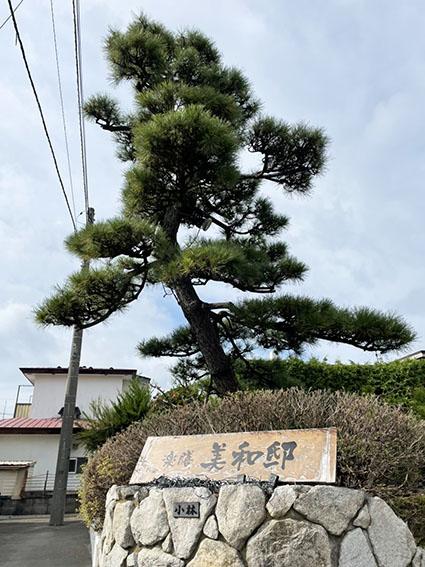 楽膳美和邸入り口の松の写真